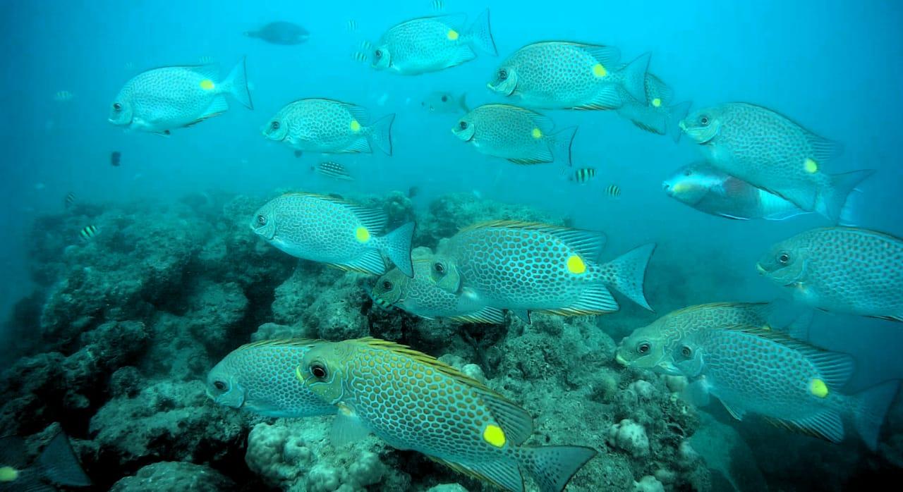 Travel De Andaman Diving